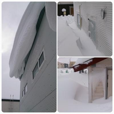 雪の観察.jpg